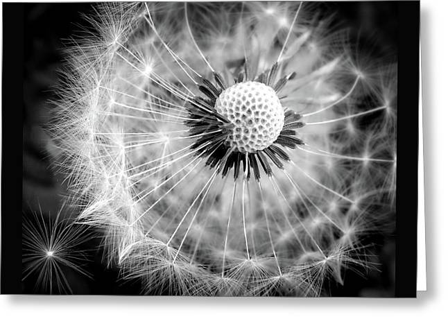Celebration Of Nature In Black And White Greeting Card by Karen Wiles