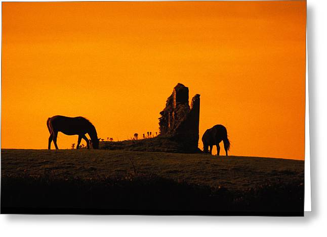 Celtic Horses At Sunset Greeting Card by Carl Purcell