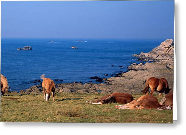 Celtic Horses On The Shore, Finistere Greeting Card by Panoramic Images