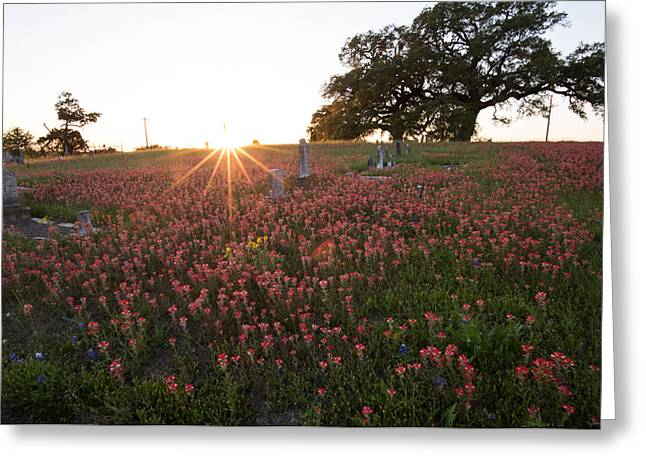 Cemetery In Bloom Greeting Card