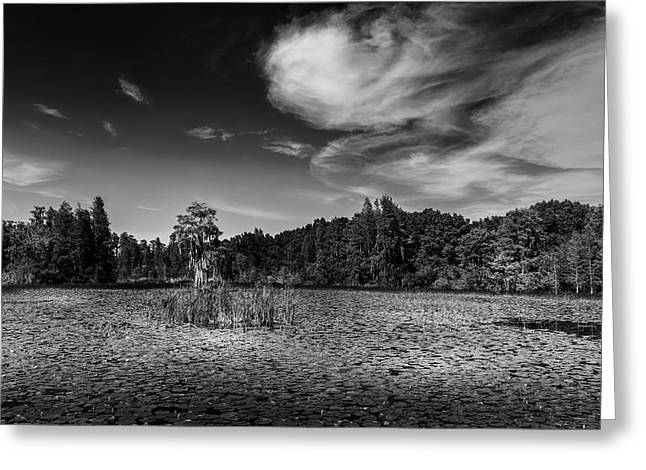 Center Cypress - Bw Greeting Card