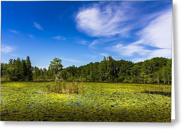 Center Cypress Greeting Card by Marvin Spates