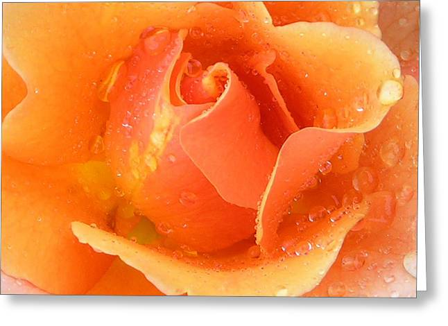 Center Of Orange Rose Greeting Card by John Lautermilch