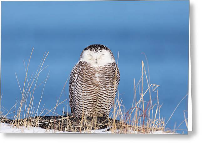 Centered Snowy Owl Greeting Card