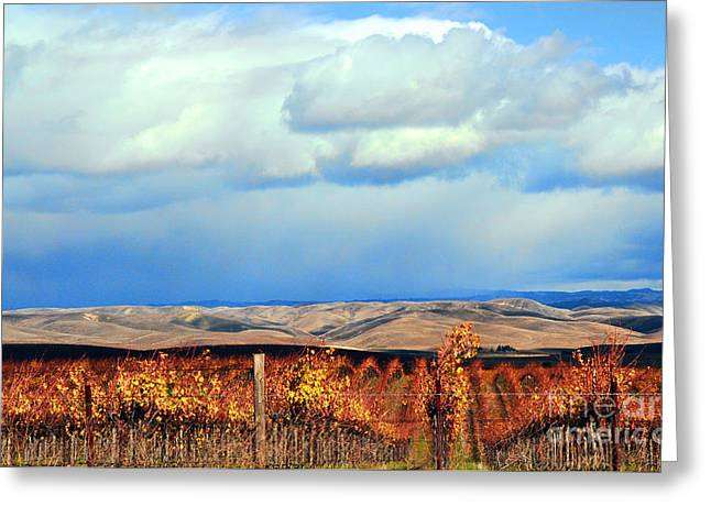 Central Coast Harvest Greeting Card by Lorrie Morrison