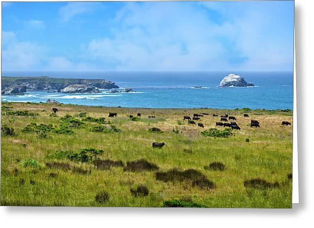 Central Coast Panorama - Hwy 1 Greeting Card by Lynn Bauer