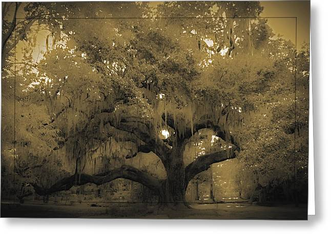 Centurion Oak Greeting Card by DigiArt Diaries by Vicky B Fuller