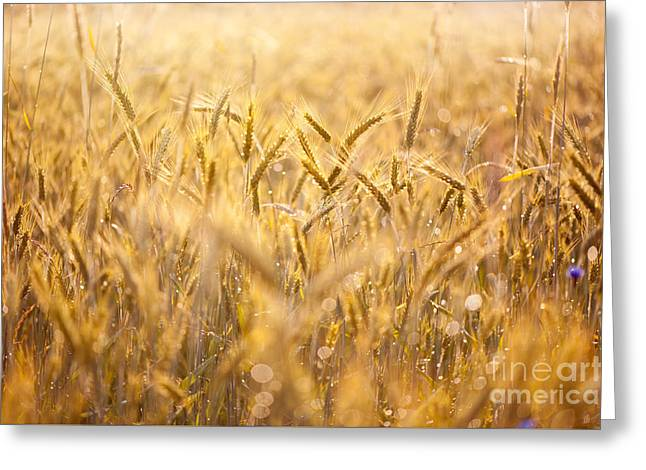 Cereal Field After The Rain Greeting Card