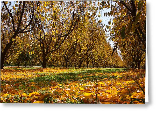 Ceres Orchard - Fall Greeting Card by Stephen Bonrepos