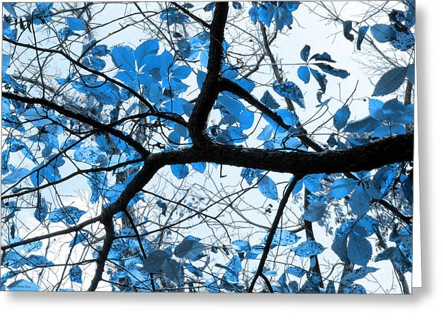 Cerulean Leaves Greeting Card by Shawna Rowe