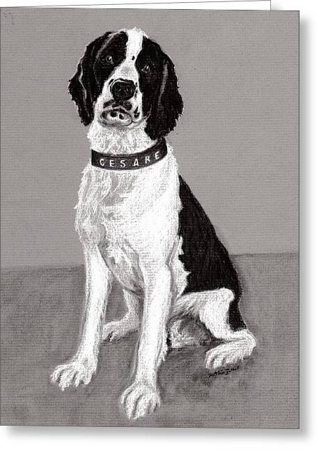 Custom Pet Drawing Greeting Cards - Cesar - Portrait of a Springer Spaniel Greeting Card by Ruthie Sutter