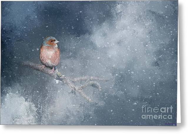 Chaffinch On A Cold Winter Day Greeting Card