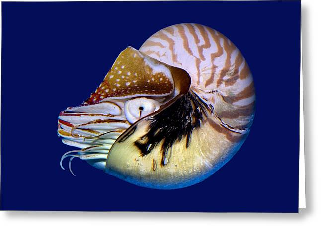 Chambered Nautilus In The Deep Blue Greeting Card by Wernher Krutein