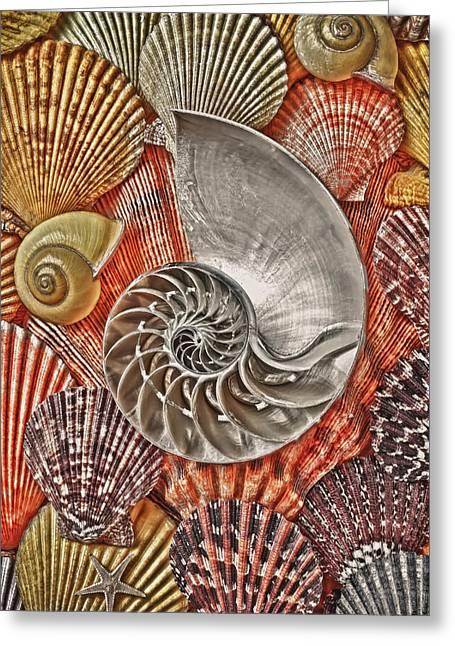 Chambered Nautilus Shell Abstract Greeting Card