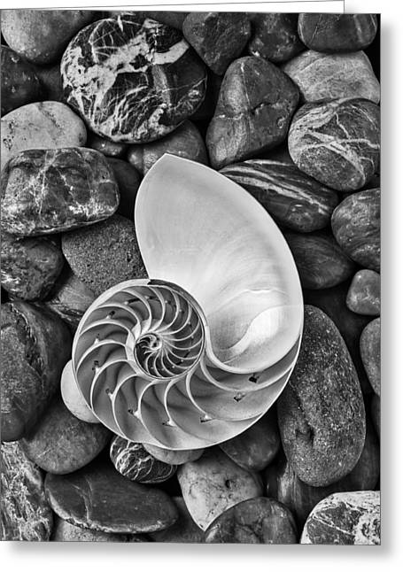 Chambered Nautilus Shell  On River Stones Greeting Card by Garry Gay