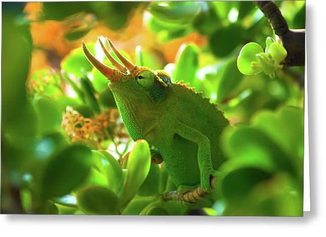 Chameleon King Greeting Card