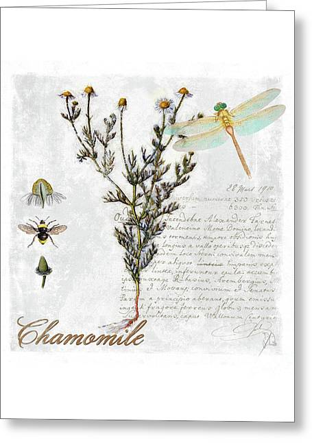 Chamomile Herb Dragonfly Botanical Illustration Art Greeting Card