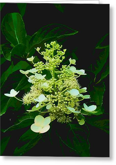 Chandelier 2 Greeting Card by Michael Taggart II