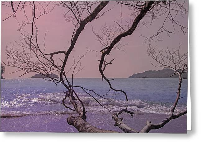 Change Of Tide Greeting Card by Betsy Knapp