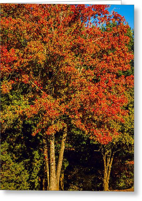Changing Colors Of Autumn Greeting Card by Barry Jones