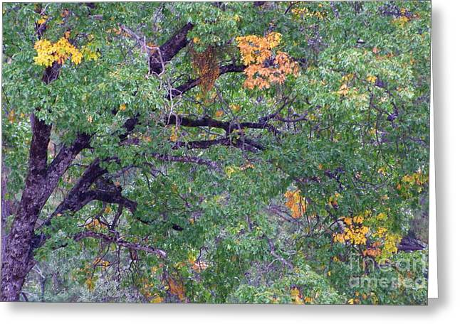 Changing Of The Seasons Greeting Card by Mary Deal