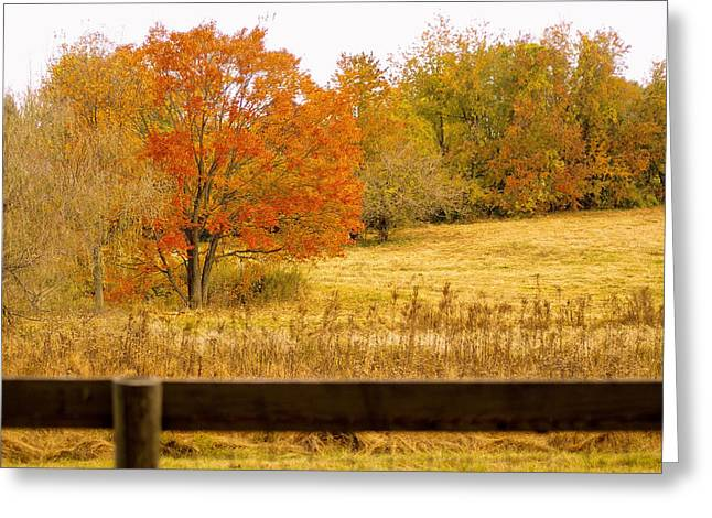 Changing Seasons Of Chester County Greeting Card