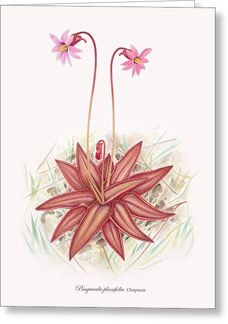 Plant Framed Prints Greeting Cards - Chapmans Butterwort Greeting Card by Scott Bennett