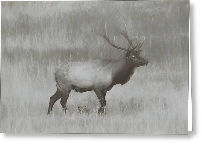 Charcoal Bull Elk In Field Greeting Card by Dan Sproul