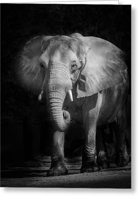 Charging Elephant Greeting Card