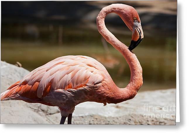 Charles Paddock Zoo Greeting Card