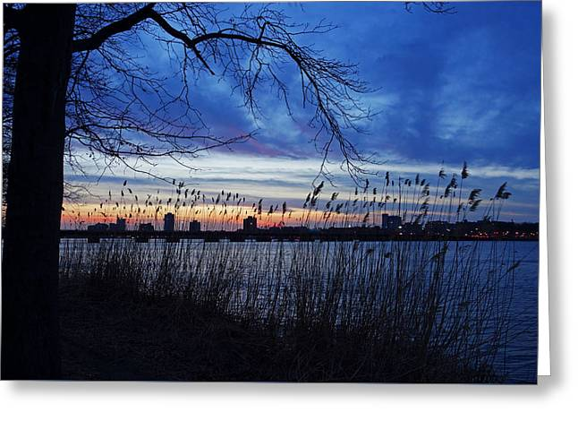 Charles River Sunset Tree Boston Ma Greeting Card