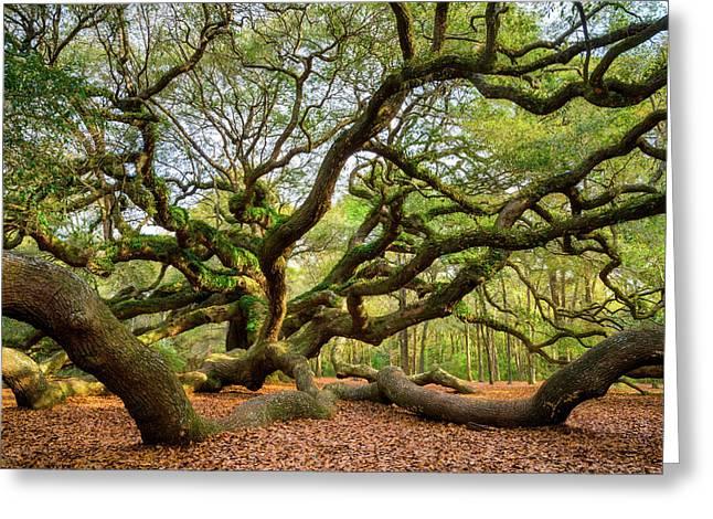 Charleston Sc Angel Oak Tree South Carolina Landscape Greeting Card