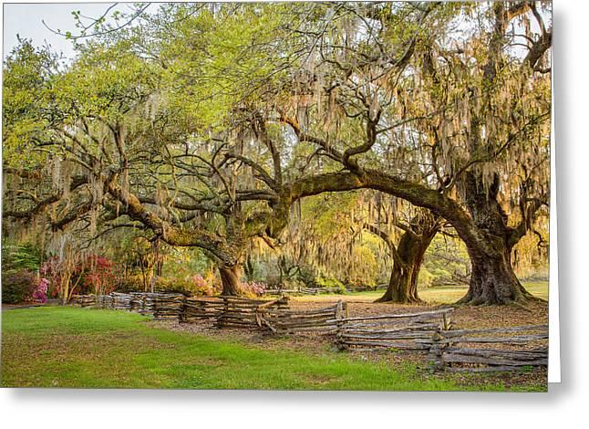 Charleston South Carolina Live Oaks Alongsplit Rail Fence Magnolia Plantation Greeting Card by Bill Swindaman