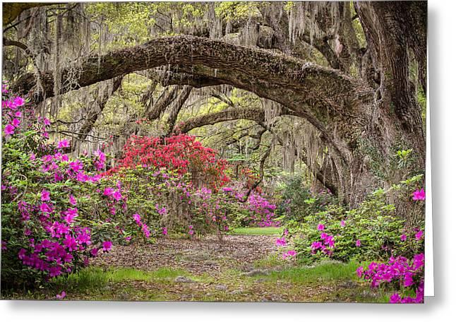 Charleston South Carolina - Spanish Moss Live Oaks And Azaleas - Magnolia Plantation Greeting Card by Bill Swindaman