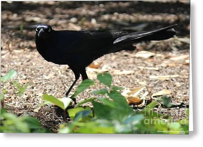 Charleston Wildlife. Black Bird Greeting Card