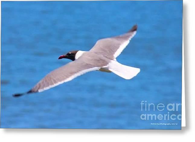 Charleston Wildlife. Seagull Greeting Card