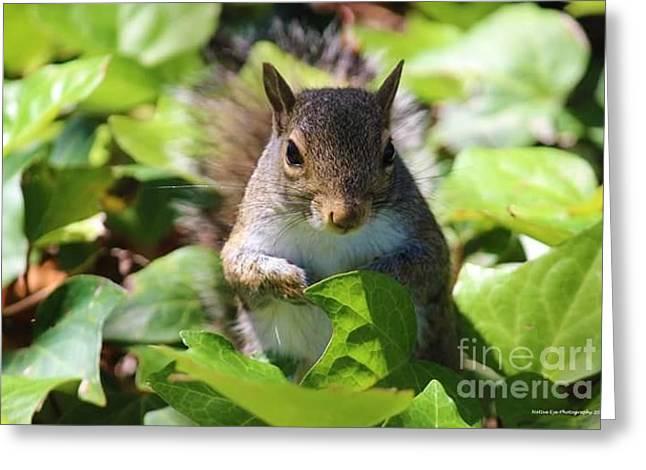 Charleston Wildlife. Squirrel Greeting Card