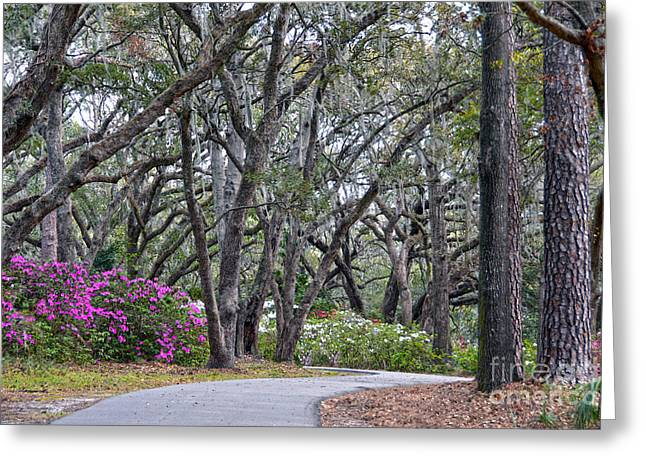 Charleston Woodland Spring Walk Greeting Card