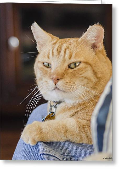 Charlie Cat Greeting Card