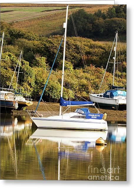 Charlotte Rose Mylor Greeting Card by Terri Waters