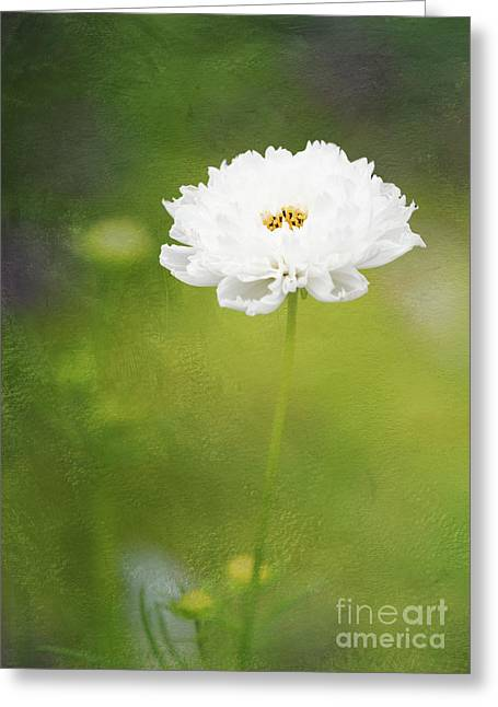 Charming White Cosmos Greeting Card