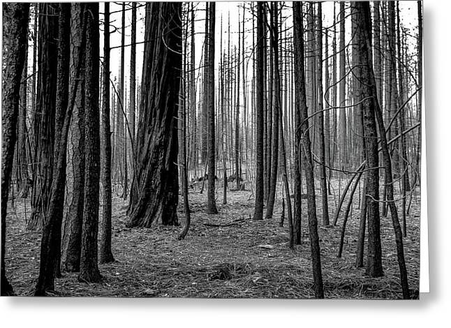 Charred Trees Greeting Card by Ralph Vazquez