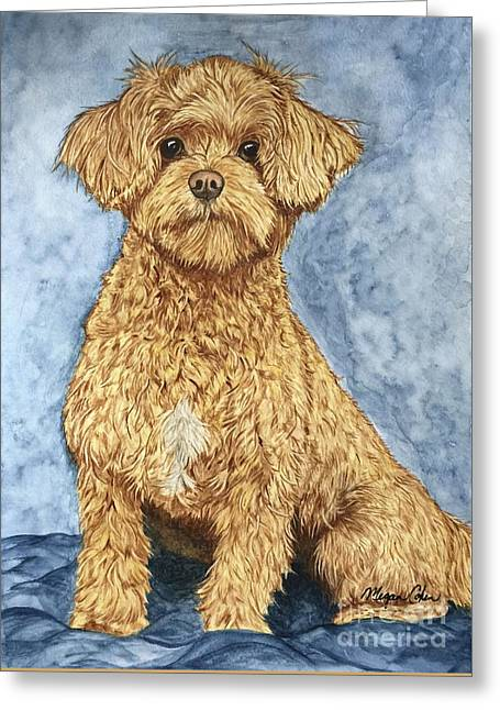 Chase The Maltipoo Greeting Card