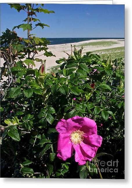 Chatham Flower Greeting Card