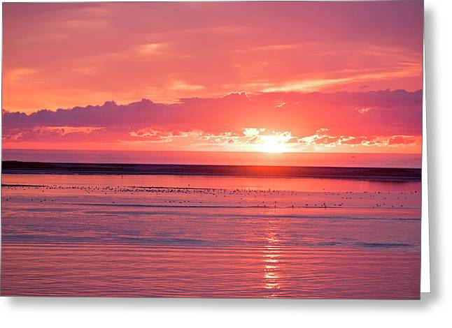 Chatham Ma Cape Cod Sunrise Greeting Card by Toby McGuire