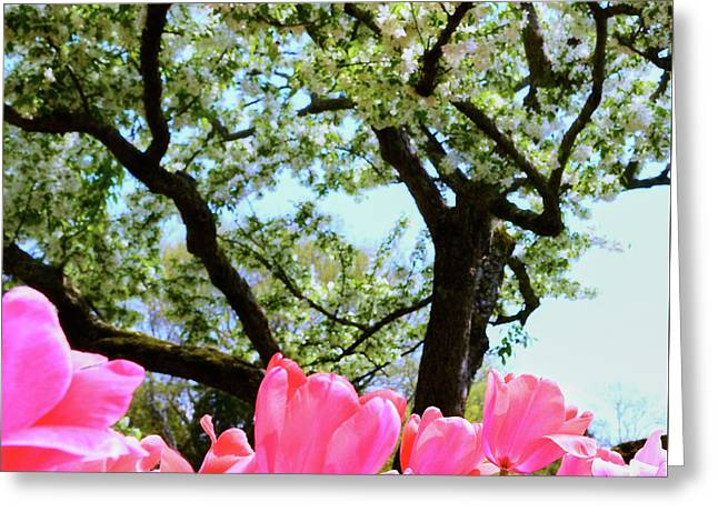 Cheekwood Bloom Greeting Card by Stanton Tubb