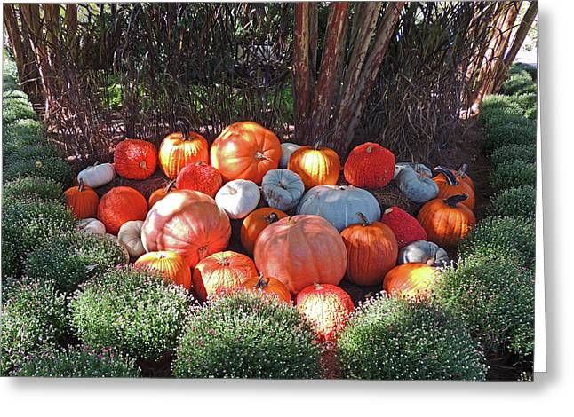 Cheekwood Gardens Most Sincere Pumpkin Patch Greeting Card