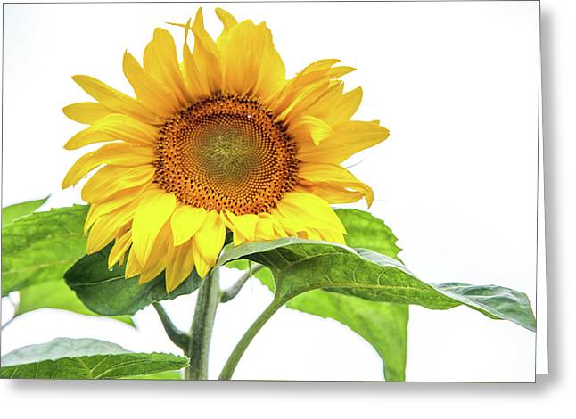 Greeting Card featuring the photograph Cheerful Flower Cheerful Mood by Jenny Rainbow