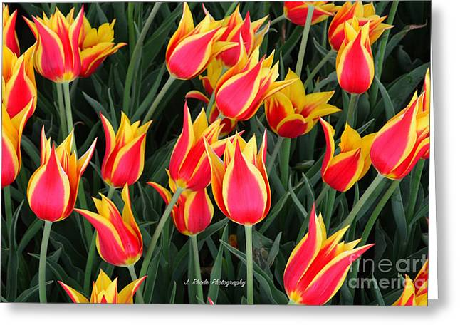 Cheerful Spring Tulips Greeting Card