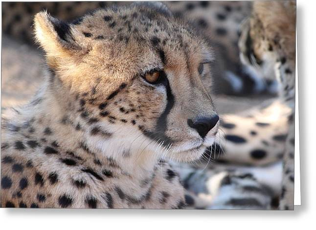 Cheetah And Friends Greeting Card